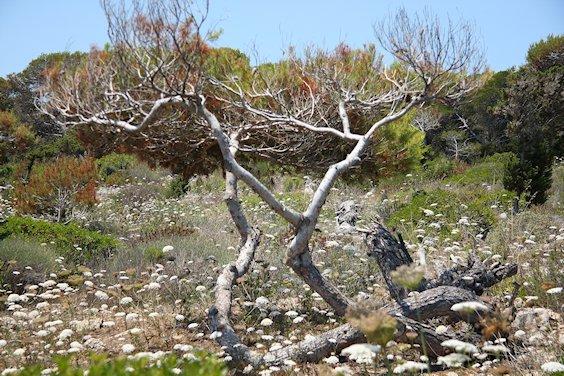 verbogener Baum